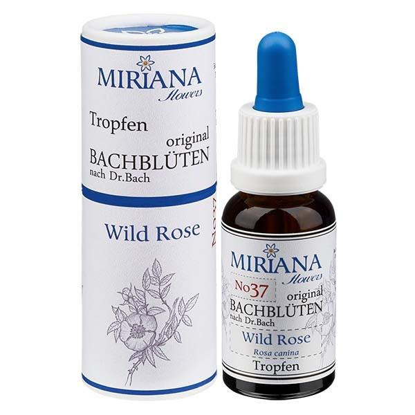 37 Wild Rose, 20ml Essenz, MirianaFlowers