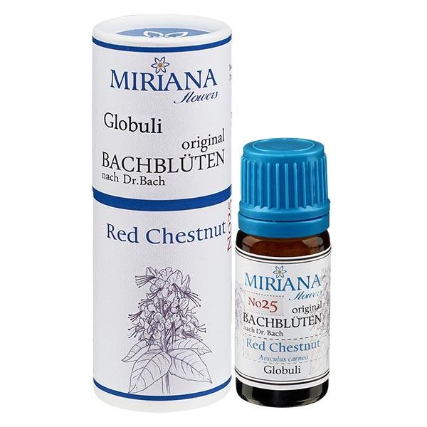 """25 Red Chestnut, 10g """"Kügelchen"""", MirianaFlowers"""